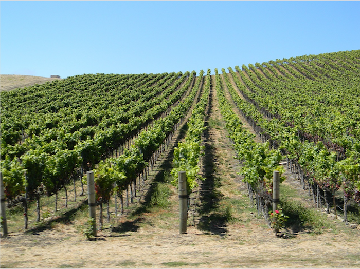 Wines of Escondido: Explore Escondido Vineyards